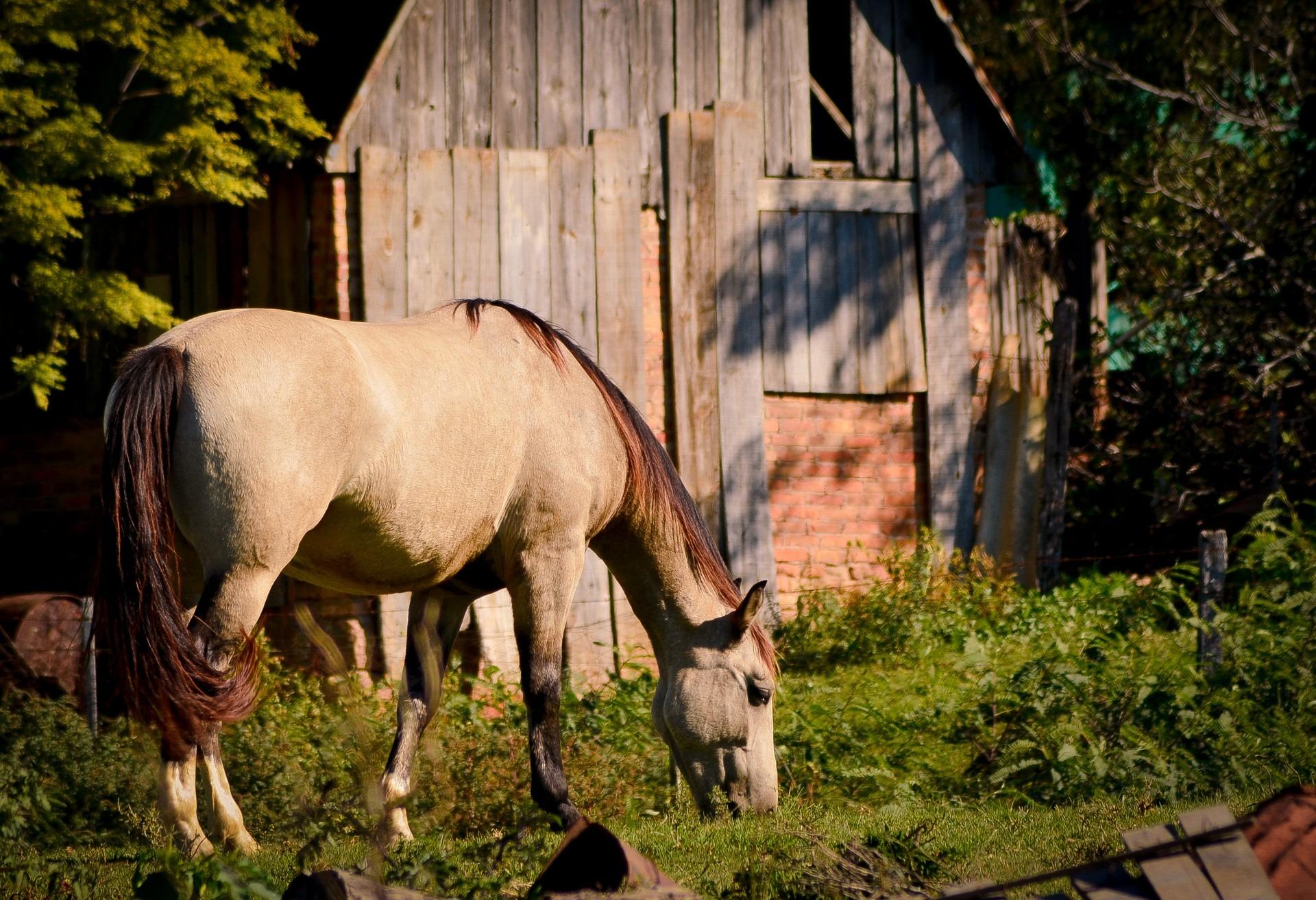 animal ranch - HD1920×1313
