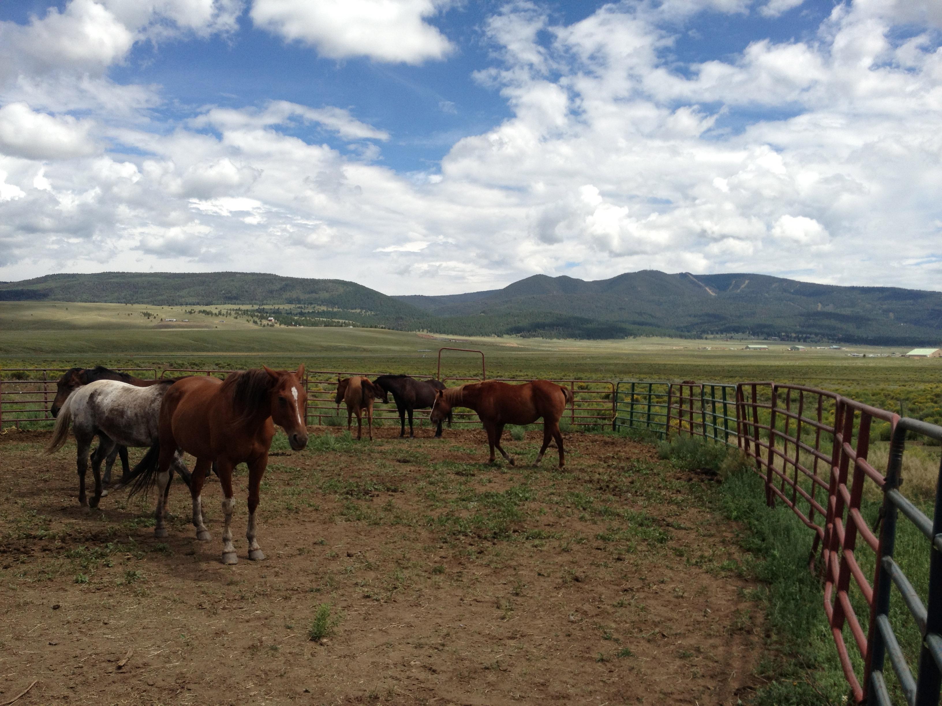 animal ranch - HD3100×2325