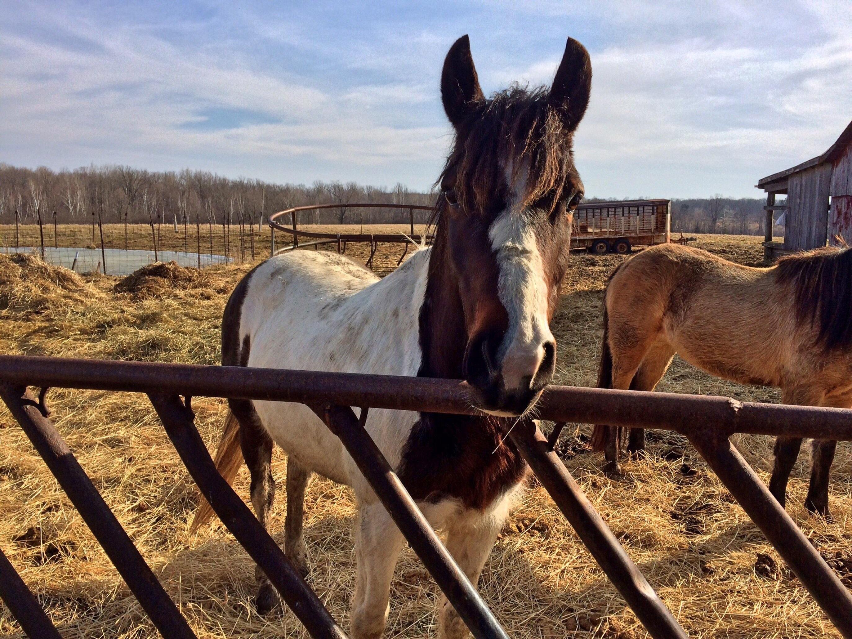 animal ranch - HD1280×959