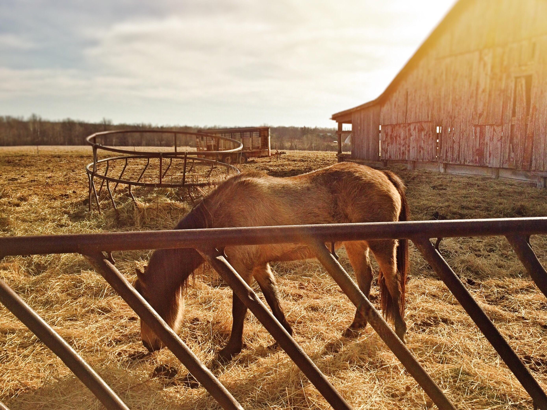 animal ranch - HD1200×899