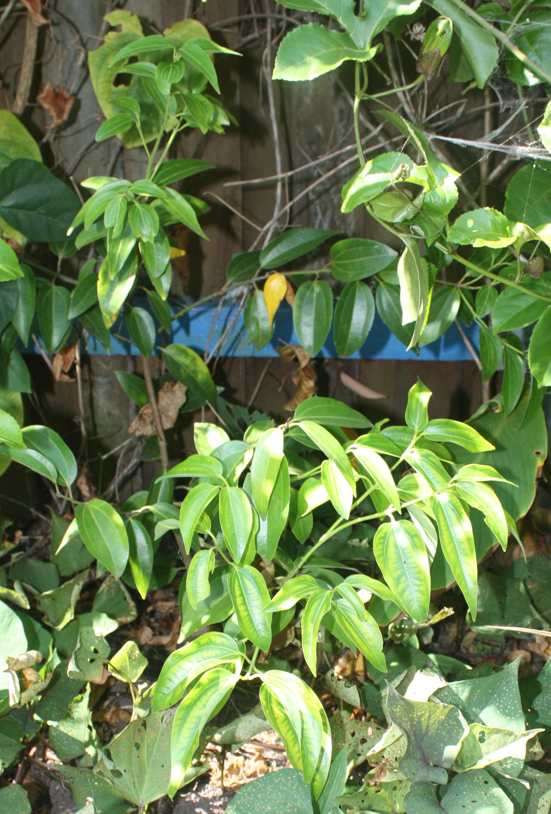 Wholesale Fruit Tree Nursery