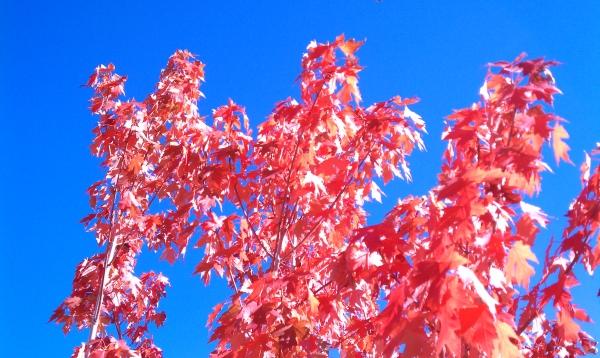 Buy Air Bonsai Tree