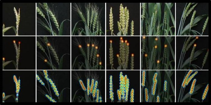 Plantae Deep Learning For Multi Task Plant Phenotyping