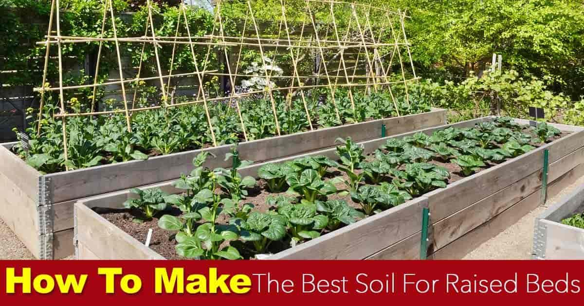 Best Soil Mixture Vegetable Garden