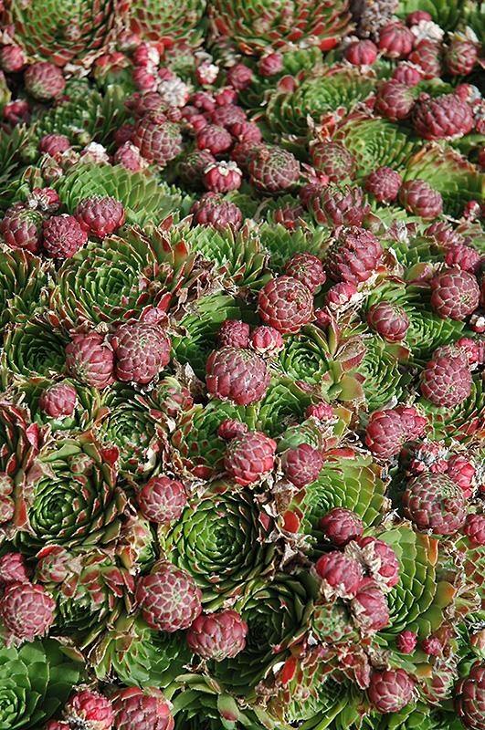 Succulent Plants Edmonton