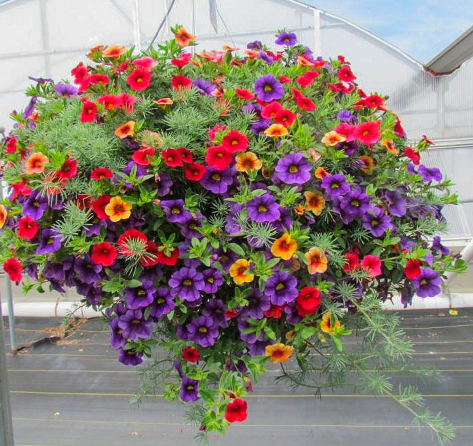 Water Garden Plant Baskets