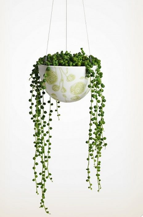 Hanging Plant Baskets Indoor