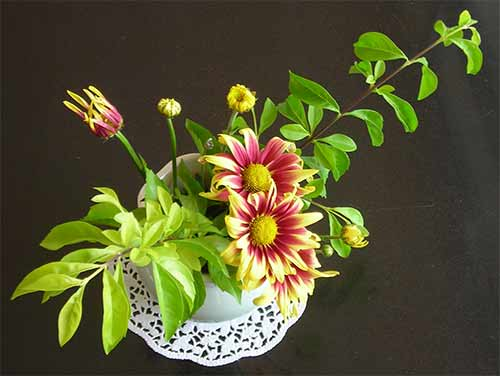 Flowers Of Cambodia