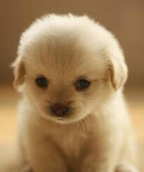 Image  Cute Puppies images cute puppy wallpaper and background     Image  Cute Puppies images cute puppy wallpaper and background photos