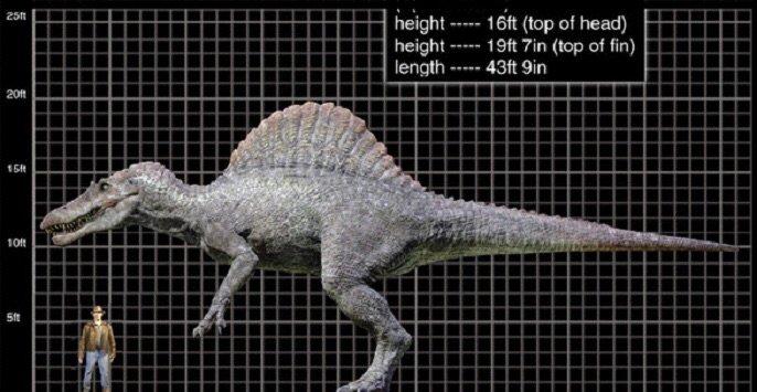 Dinosaur Feet Measurements