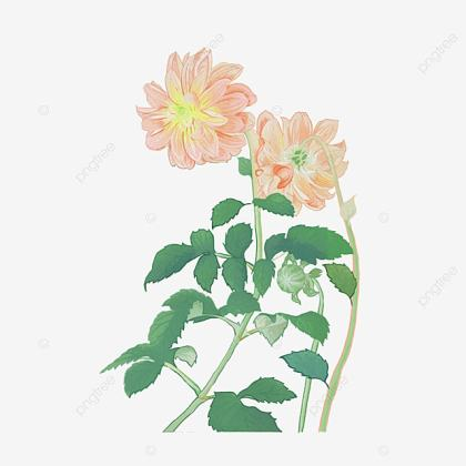 Chinese Style Flowers Meticulous  Chinese Clipart  Chinese Flowers     chinese style flowers meticulous  Chinese Clipart  Chinese Flowers   Classical Flowers PNG Image and