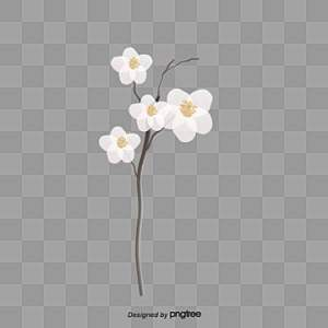 Real Flowers PNG Images   Vectors and PSD Files   Free Download on     white flowers  Creative Flowers  Flower Decoration  Fresh PNG Image and  Clipart
