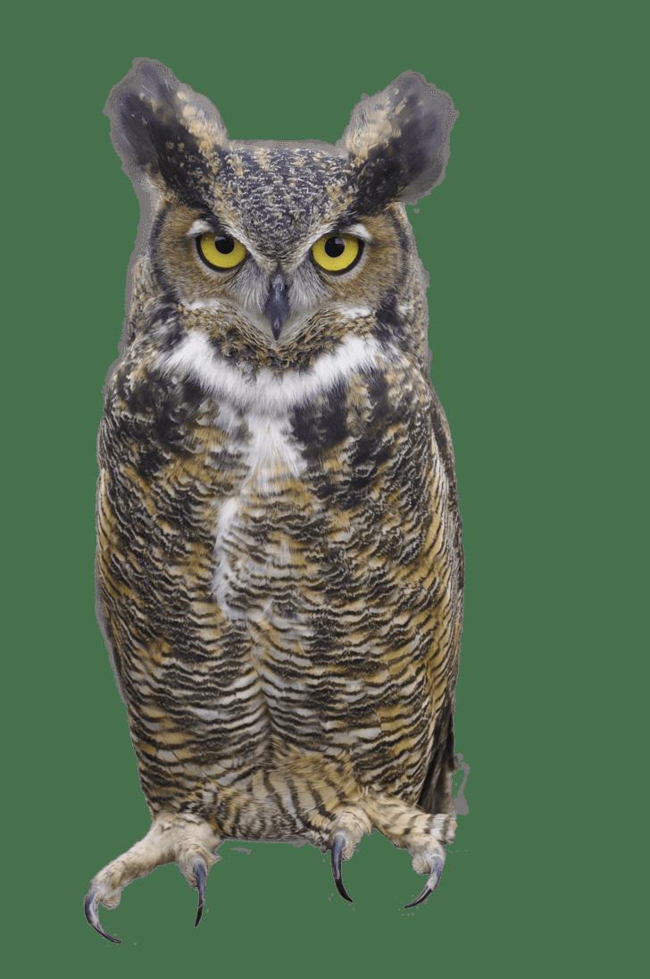 Vision Animals Binocular