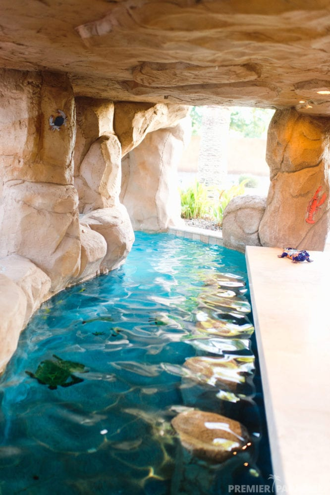 Freeform Custom Pool With Grotto Cave In Gilbert Arizona