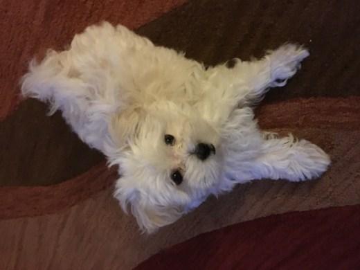 Puppies Adoption Riverside Ca