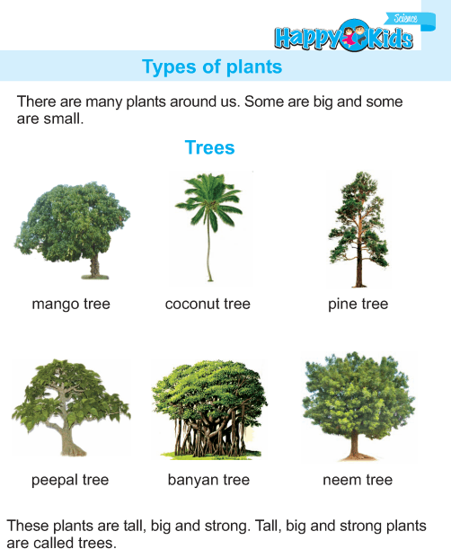Types Of Trees With Names - House Beautiful - House Beautiful