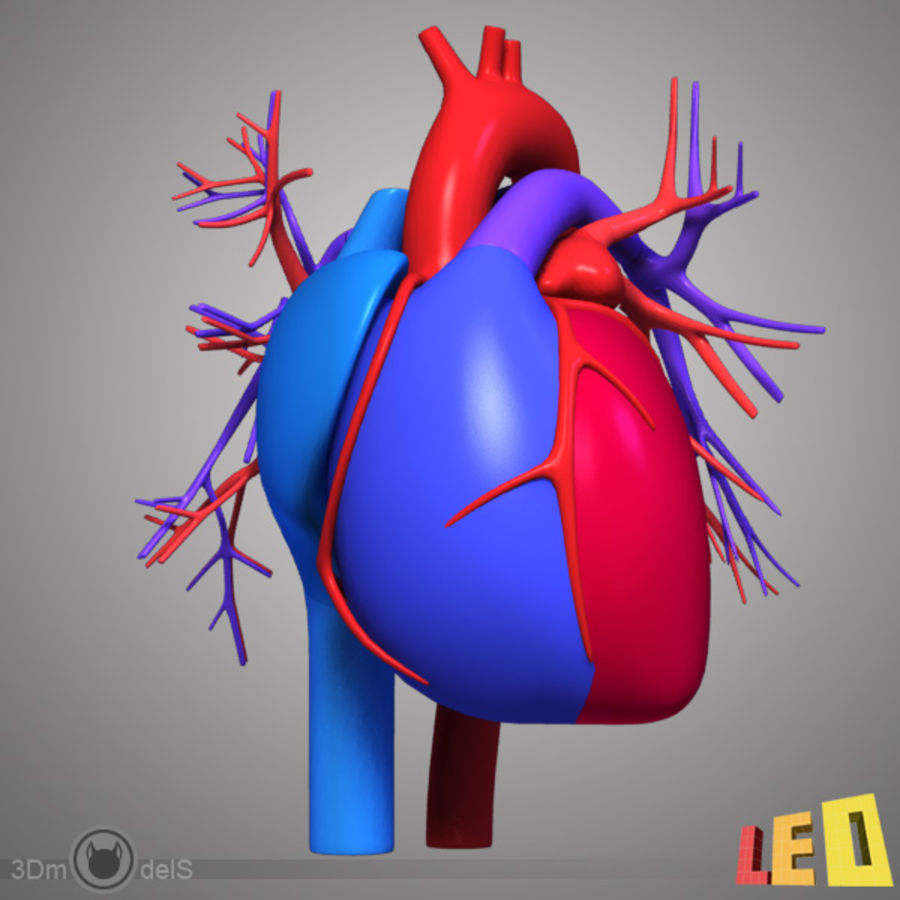 Circulatory system / Heart 3D Model $20 - .ma .obj .max ...