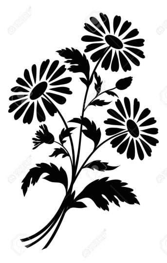 Bouquet Of Chamomile Flowers  Black Silhouettes On White Background     Bouquet of chamomile flowers  black silhouettes on white background Stock  Vector   14043637