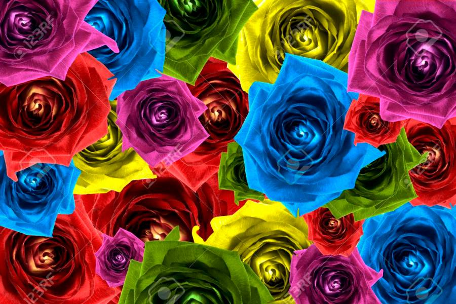 Mix Collage Of Rose Flowers Rainbow Background  Red  Violet    Stock     Mix collage of rose flowers rainbow background  red  violet  rose  orange
