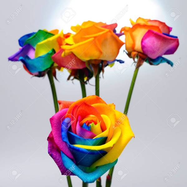 Bouquet Of Multicolored Rose Flower   Rainbow Rose With Colored     Bouquet of multicolored rose flower   rainbow rose with colored petals  Stock Photo   91319660