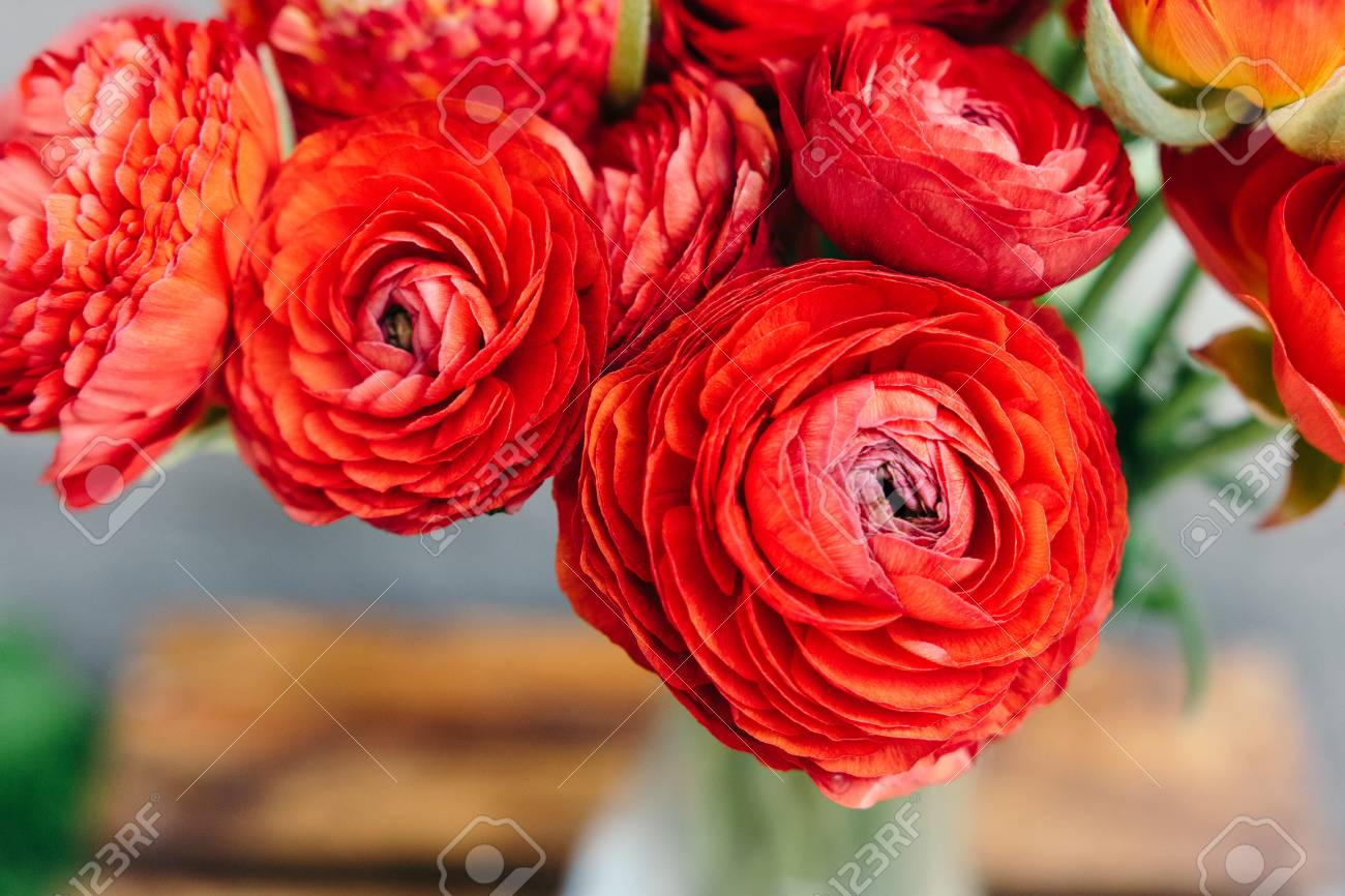 Bouquet Of Red Ranunculus Flowers On A Rustic Background  Close     Bouquet of red ranunculus flowers on a rustic background  Close up Stock  Photo   76399951