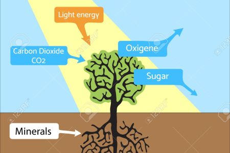Photosynthesis process hd images wallpaper for downloads easy how to explain the basic process of photosynthesis to children quora beside this many minerals and nutrients also required for photosynthesis photosynthesis ccuart Choice Image
