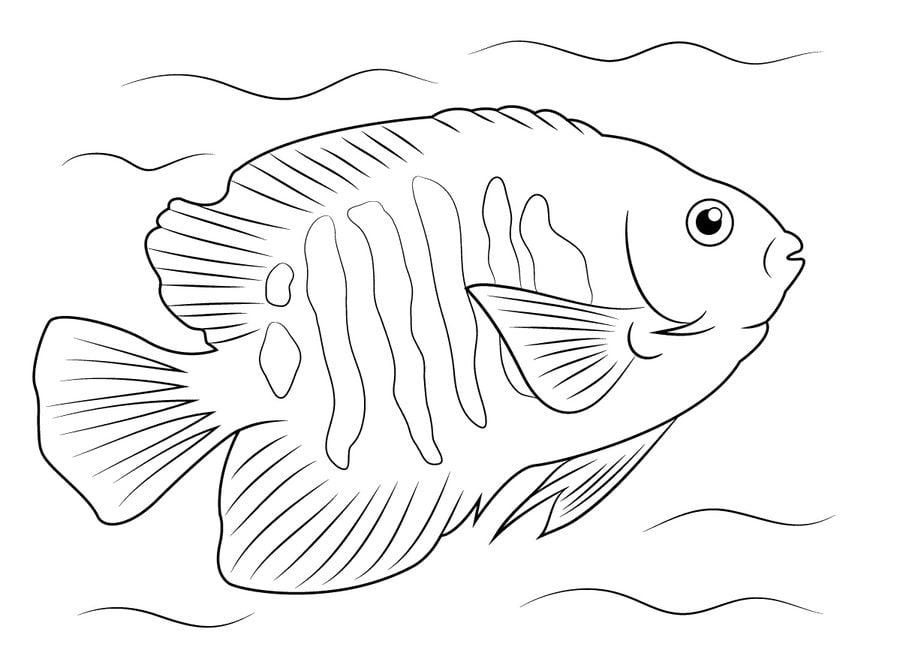 Coloring Page Fish Sheets