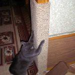 Kat krassen hoekrem