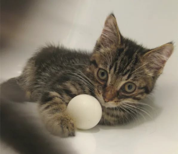 Котёнок и мячик