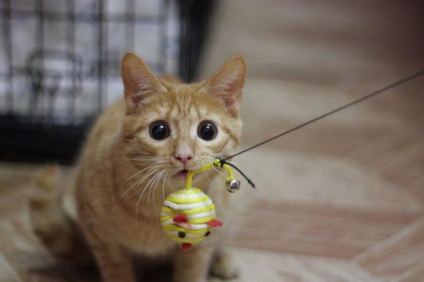 Кот с мышкой-шариком