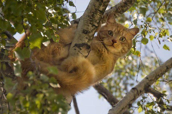 گربه در درخت