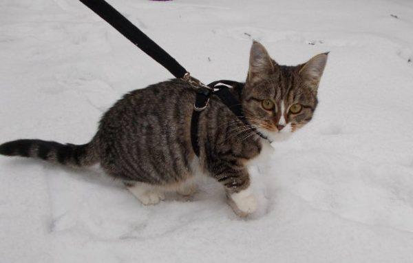 Bir yürüyüşte kedi