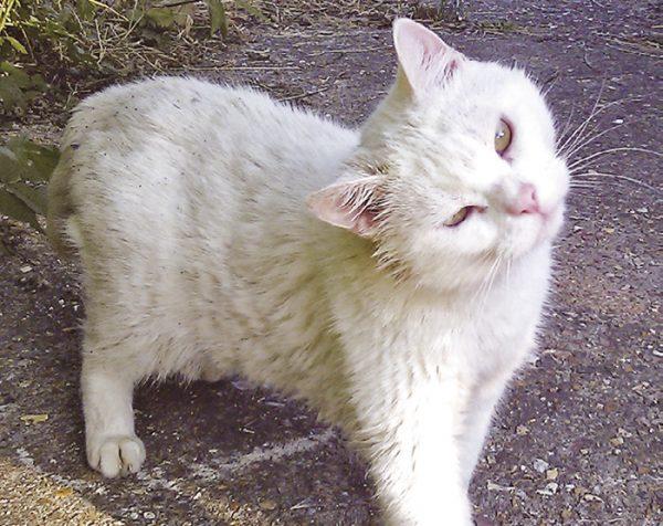 Outdoor otitis kissa