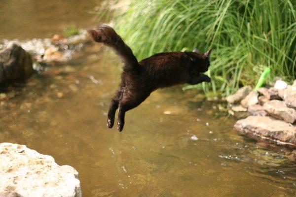 กระโดดแมว