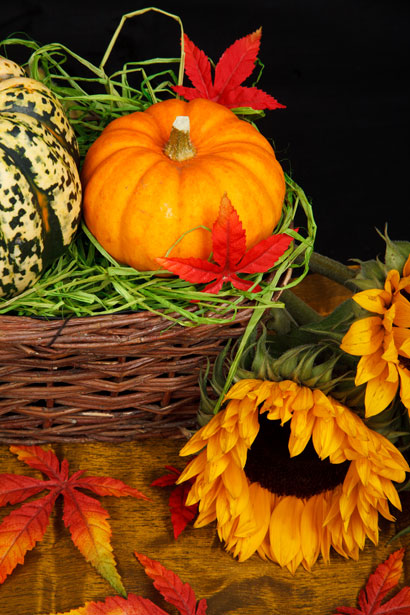 Fall Sunflower And Pumpkin Wallpapers