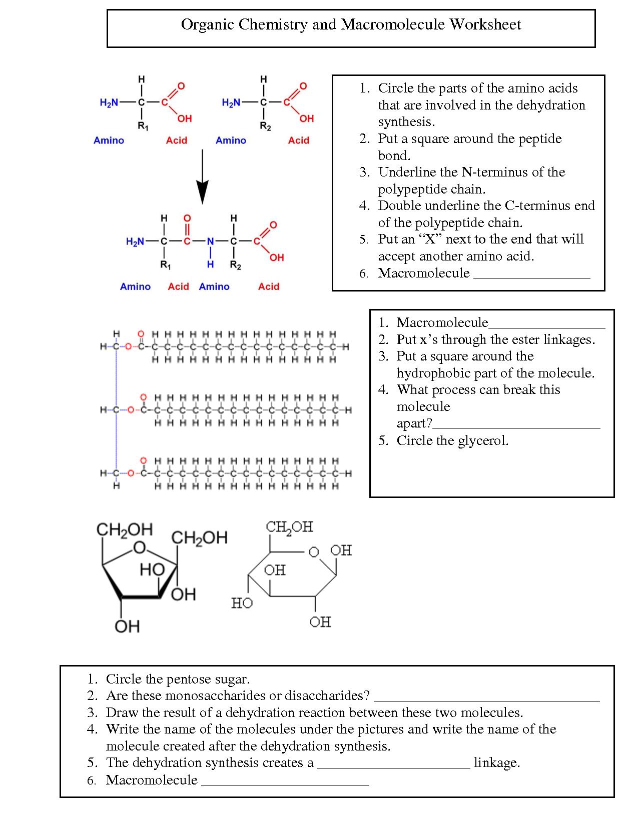 worksheet Organic Chemistry Worksheets organic chemistry worksheet free worksheets library download and g nic w ksheet 6 m cromolecules ksheet