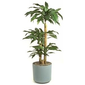 Enchanting Office Plants No Light Design Decoration Of Best Best Office  Plants For Low Light Plants Office Garden Green Clean Plants That Require  Little ...