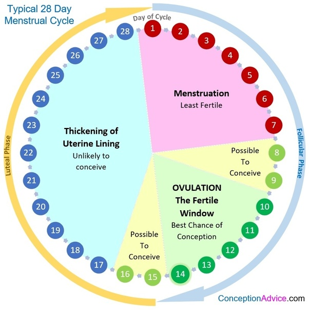 In a 27 day cycle, when do you ovulate? - Quora