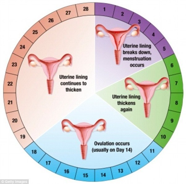 Is there a chance of getting pregnant 15 days from a ...