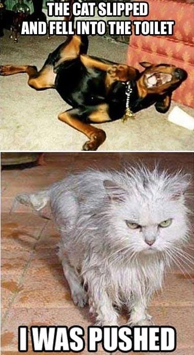 angry wet dog - 382×697