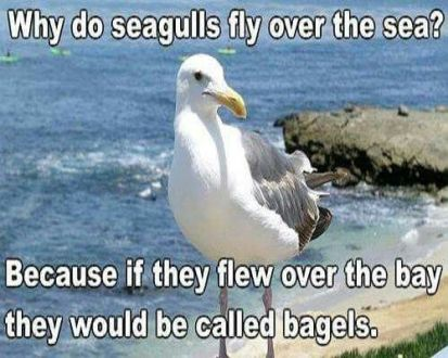 Best 32 Silly Jokes   Quotes and Humor Best 32 Silly Jokes  Silly  Jokes