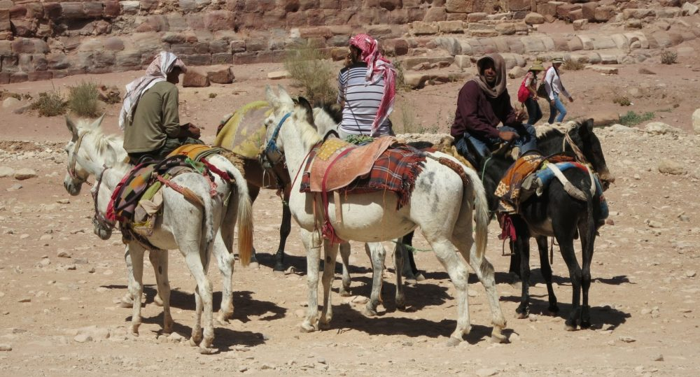Horses and donkeys wait for customers with their owners: Petra travel advice: 10 tips for visiting Petra