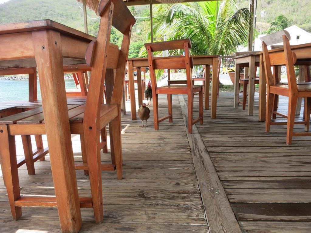 This picture is taken from near the floor: a worn wooden floor and a number of wooden tables, less worn, each with simple wooden stools pushed up to them. In the background are some low palm trees. Two chickens walk on the wooden floor toward the camera.