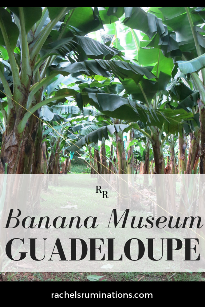Read here about the Banana Museum of Guadeloupe, which held much more than bananas! #bananas #guadeloupe