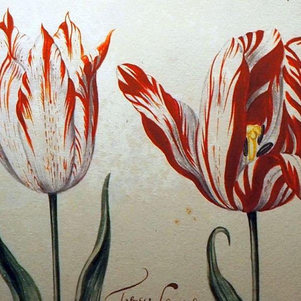 Amsterdam Tulip Museum review