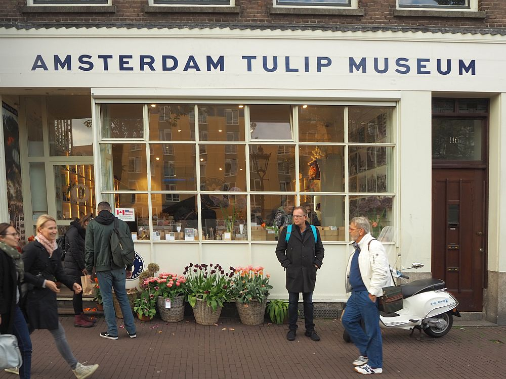 The Amsterdam Tulip Museum is in a storefront with a big multi-pane shop window. People pass by on the street in front. Big pots of tulips under the shop window.