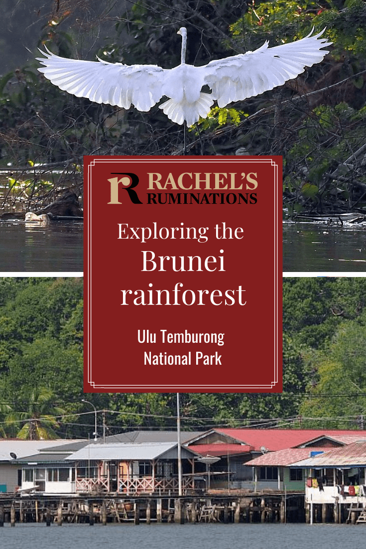 The Brunei rainforest at Ulu Temburong National Park is pristine and a great place to get a taste of what an old-growth rainforest is like. via @rachelsruminations