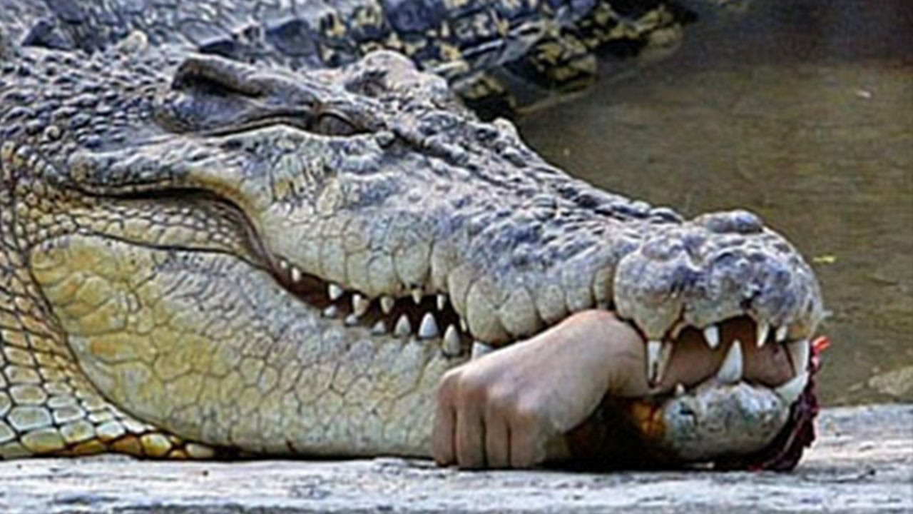 man eaten by crocodile - 720×405