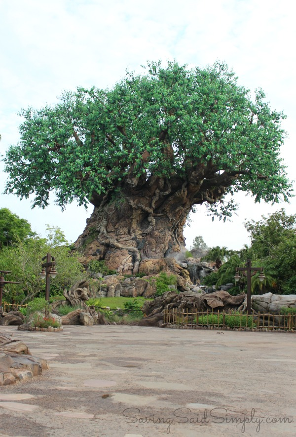 Disney animal kingdom tree of life