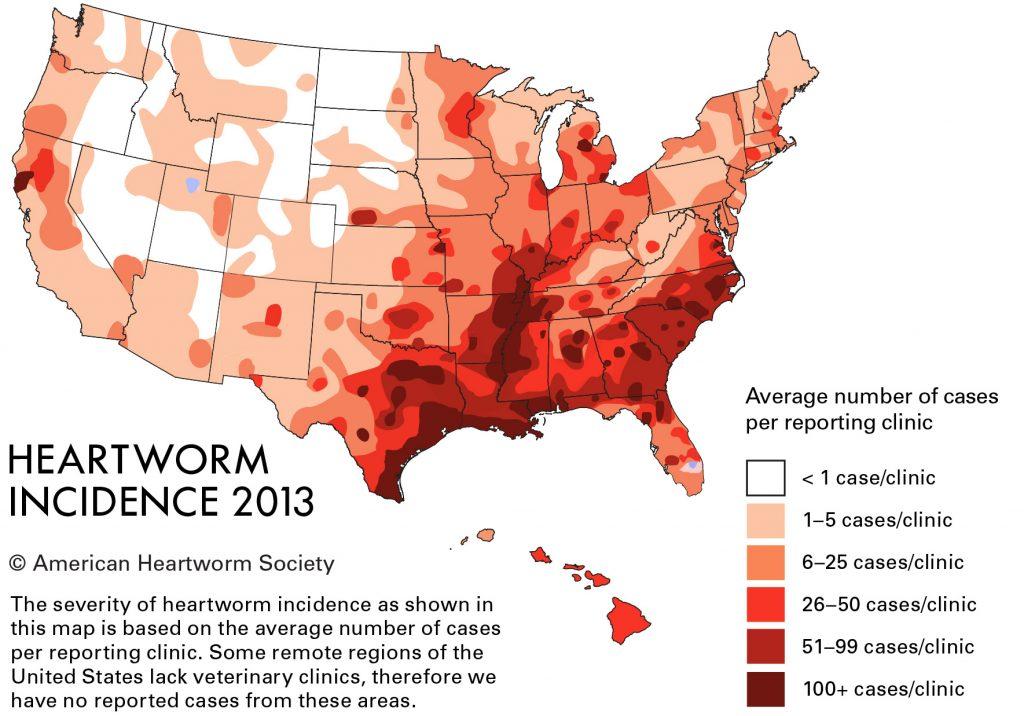Heartworm Disease By Dr Krista Hight Reber Ranch Kent Wa